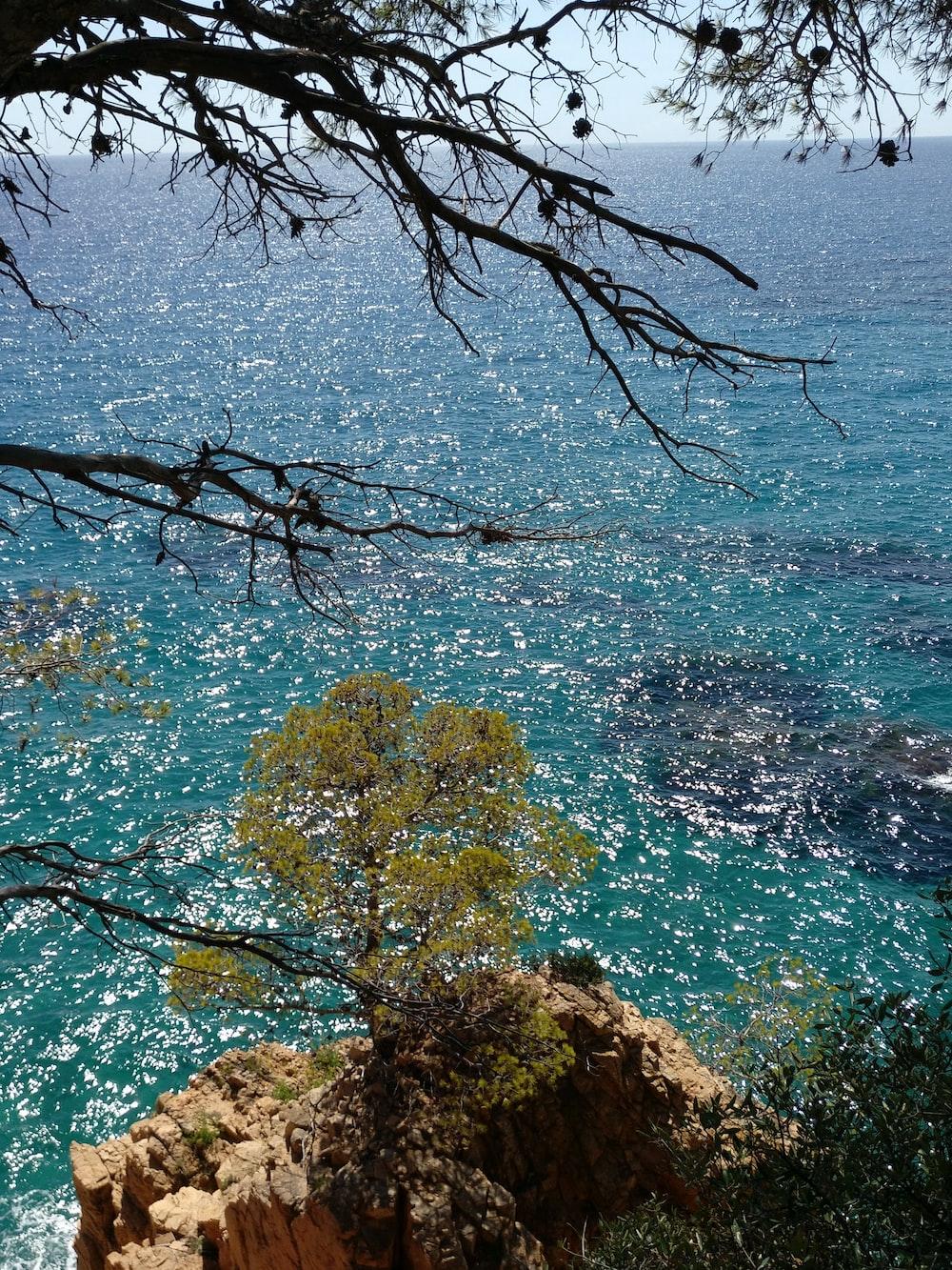 trees near body of water
