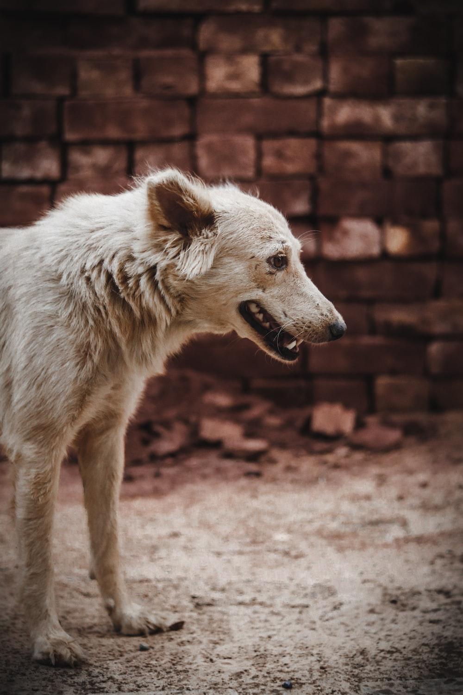 short-coated white dog on focus photography