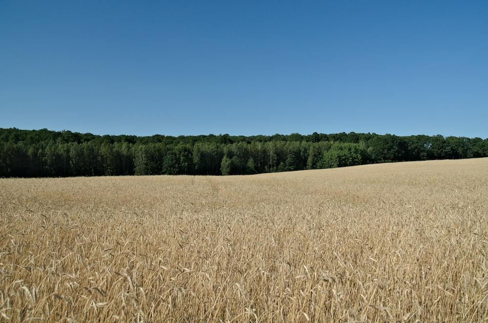 open field under clear blue sky
