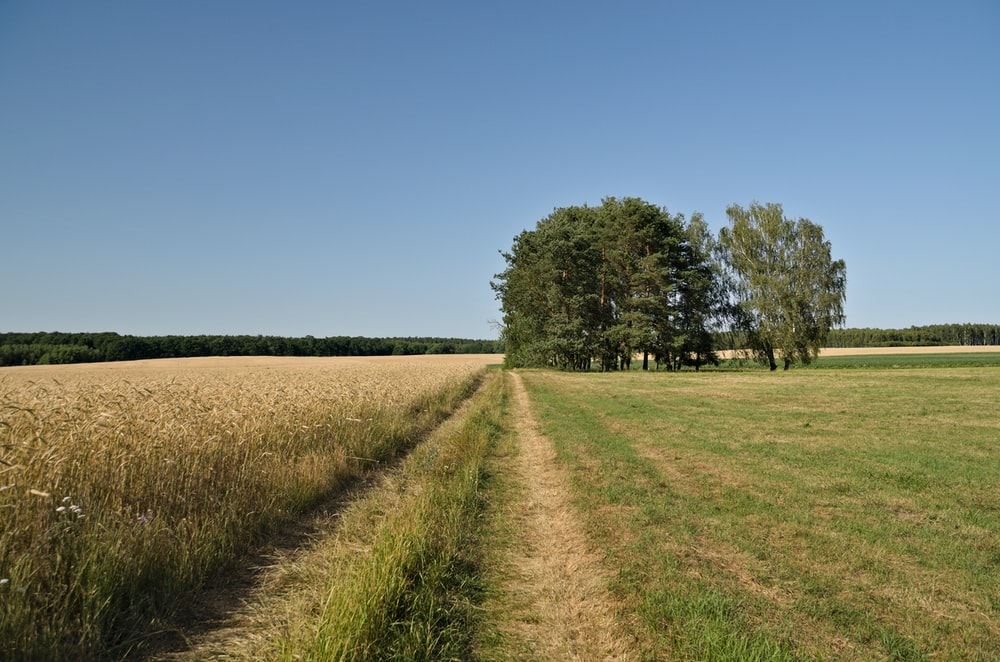 green field with trees under clear blue sky