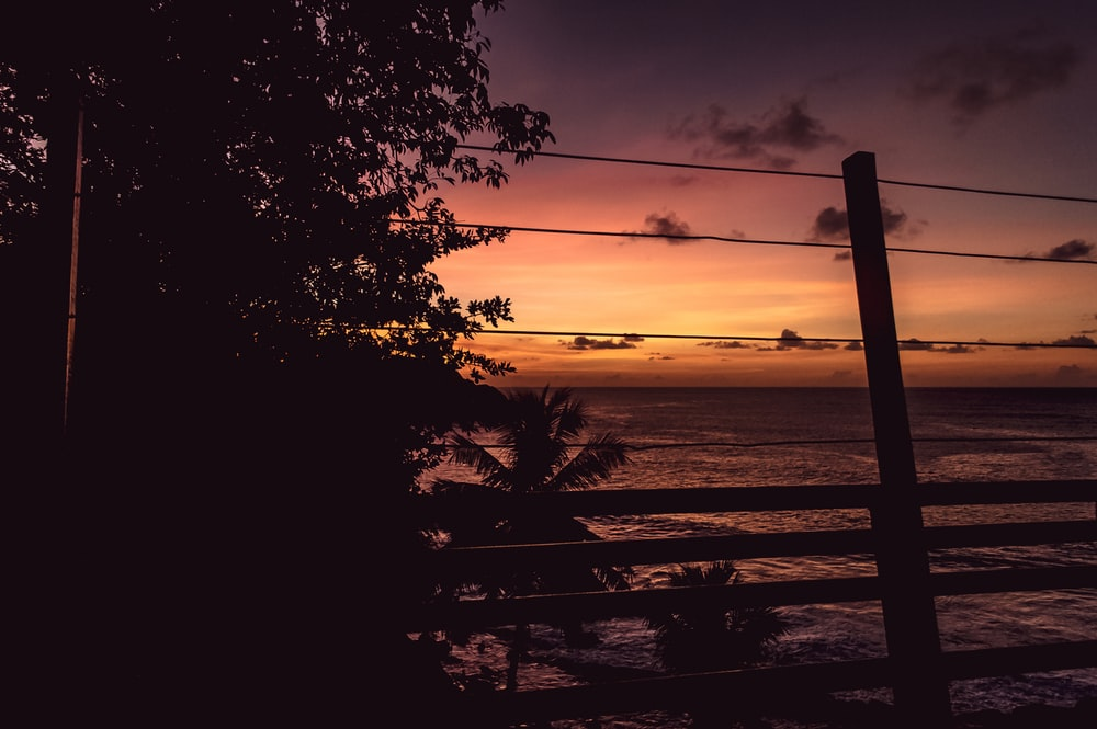 silhouette of fence and tree