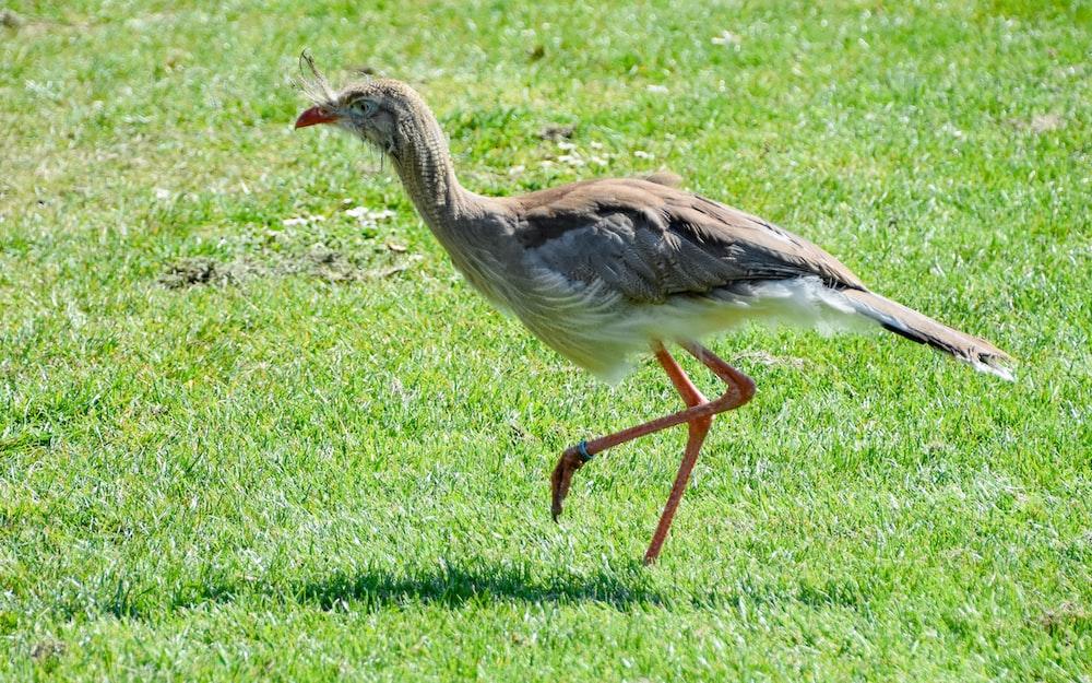 whitgrey bird