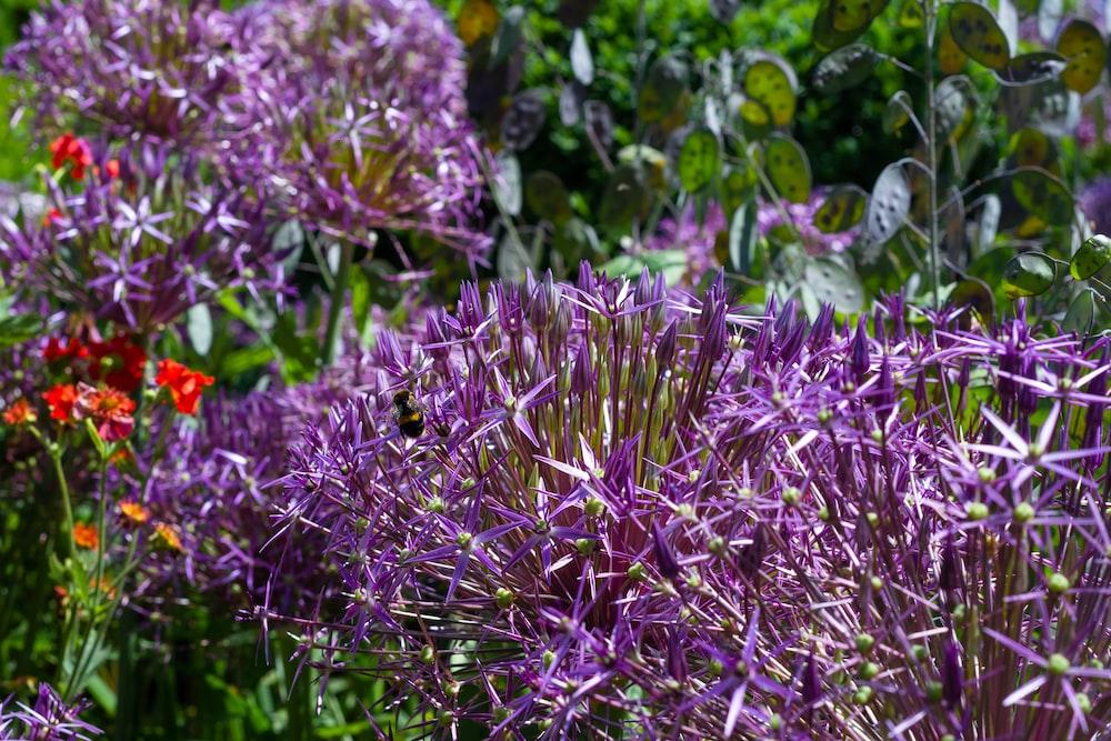 purple petaled flower