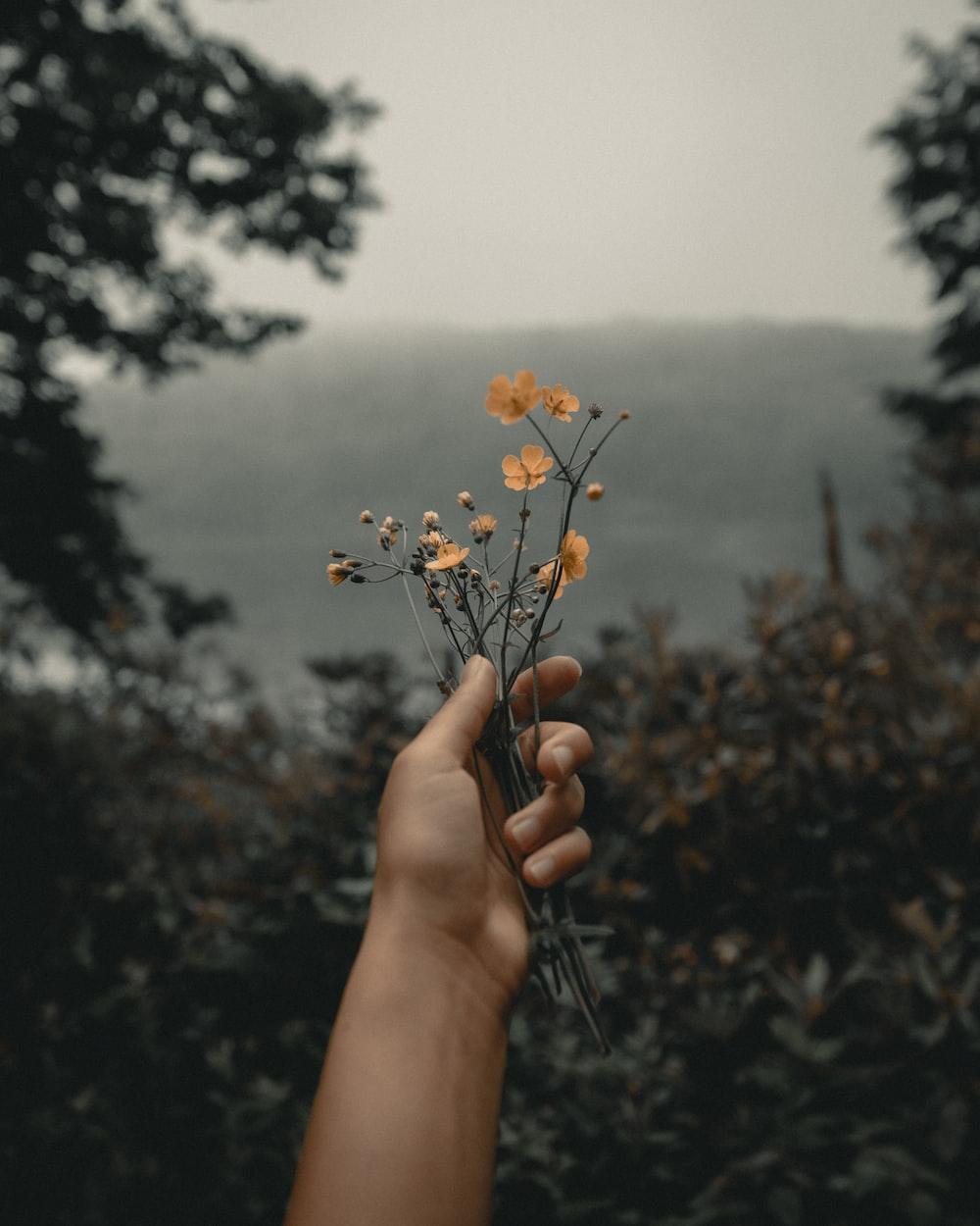 person holding orange-petaled flowers