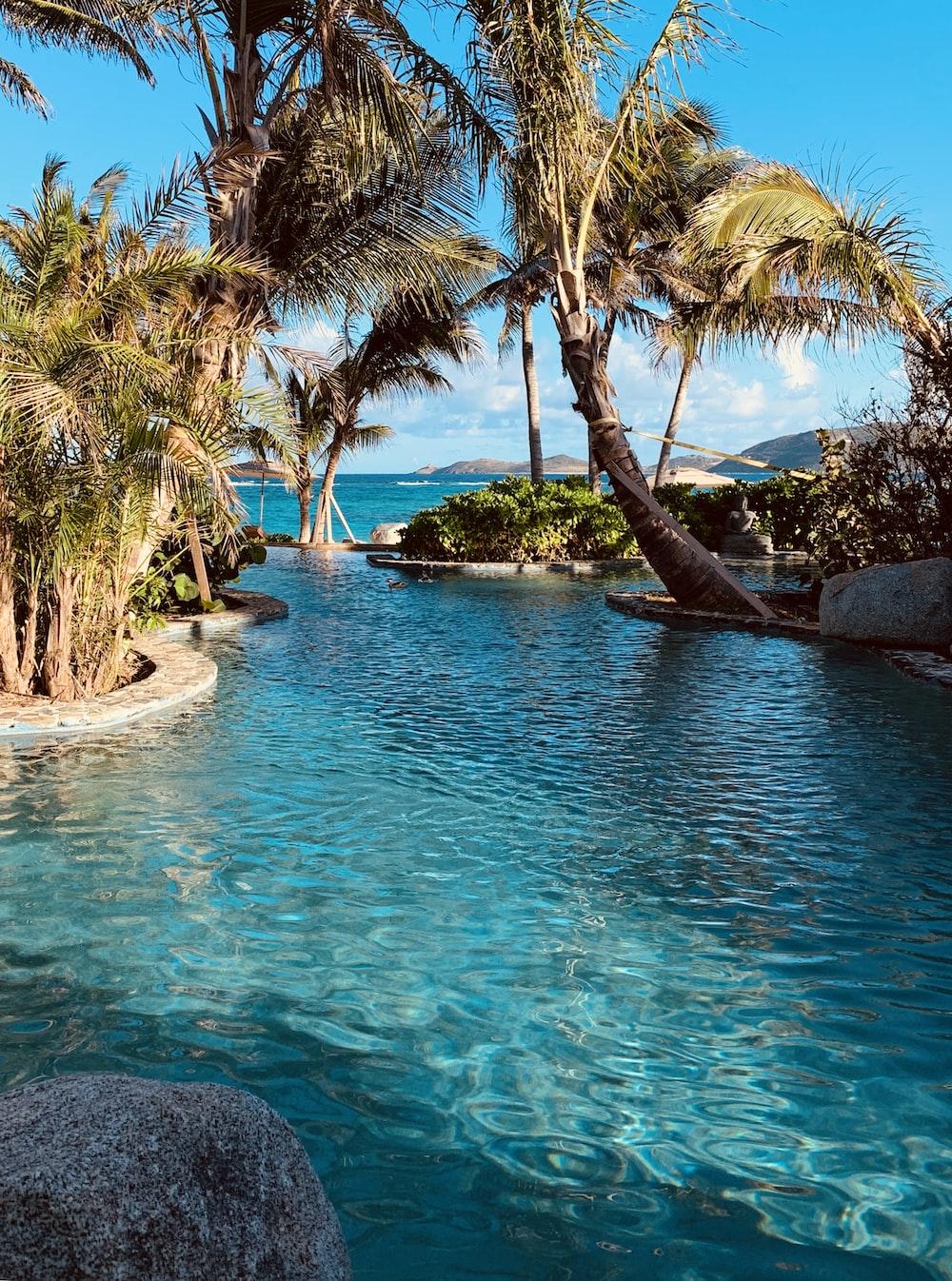 green coconut palm tree near infinity pool