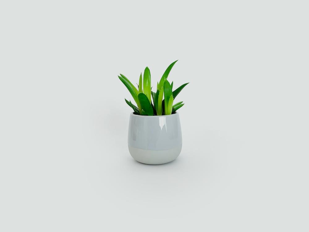 green leaf plant on white ceramic pot