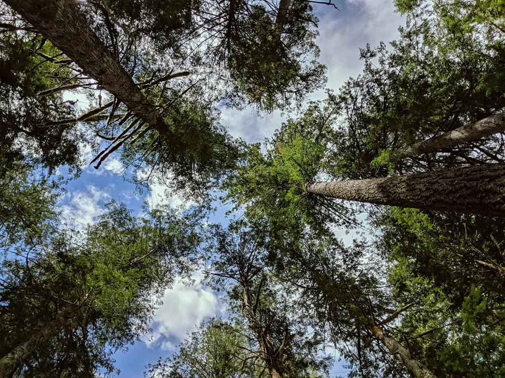 low-angle photography of forest '