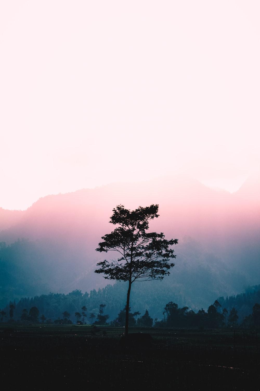 green tree across foggy mountain