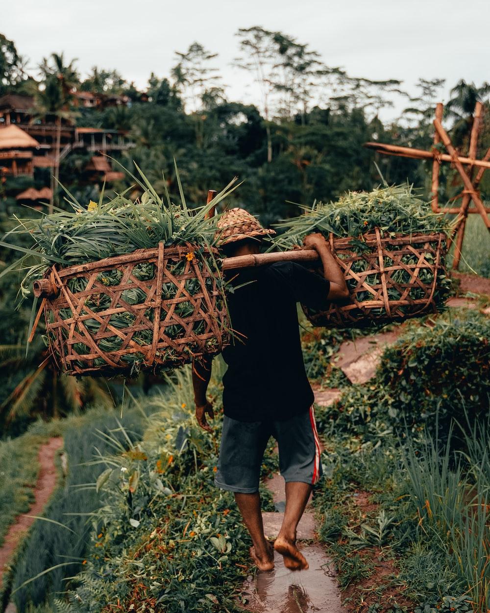 man carrying green crops