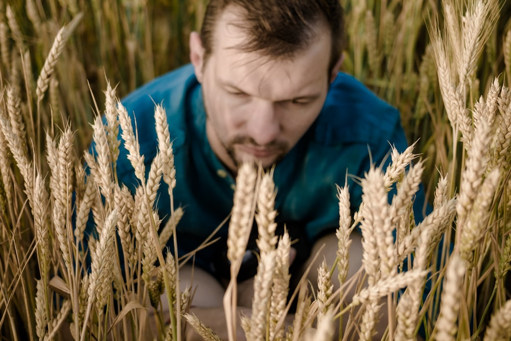 selective focus photography of man near wheat field