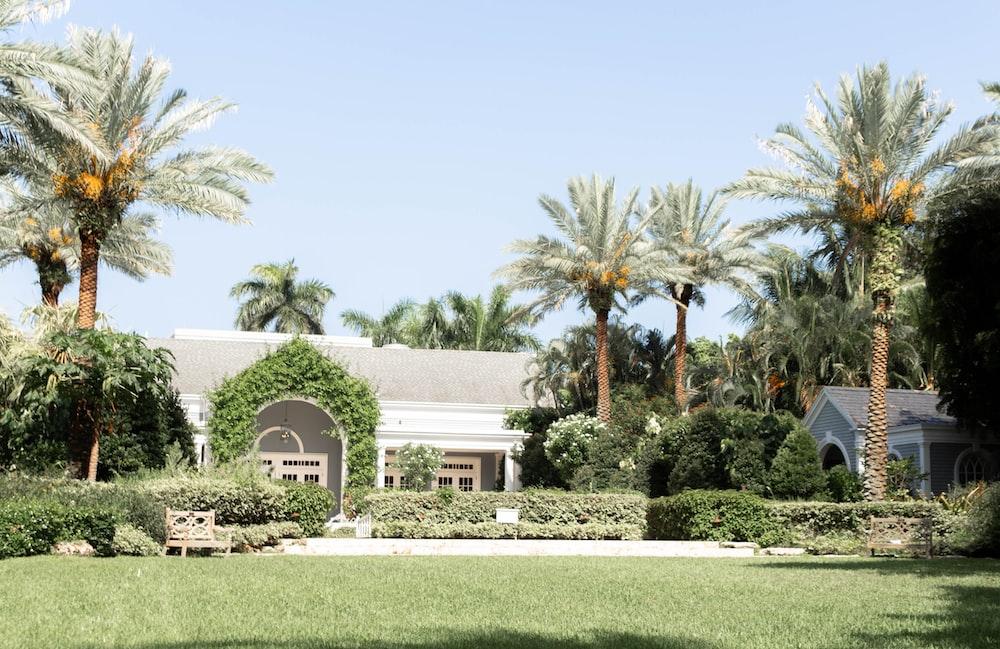 palm trees beside house