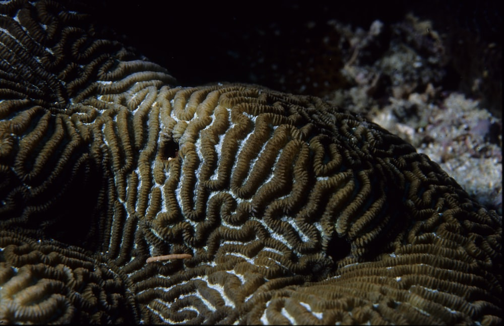 One Tree Reef. Coral.