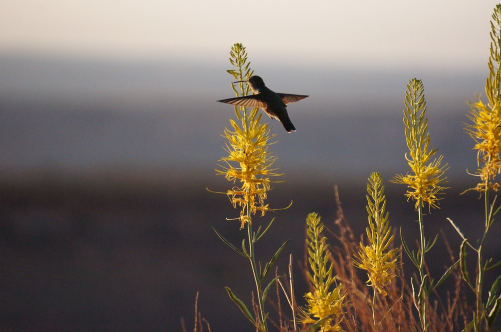 hummingbird flying around grass