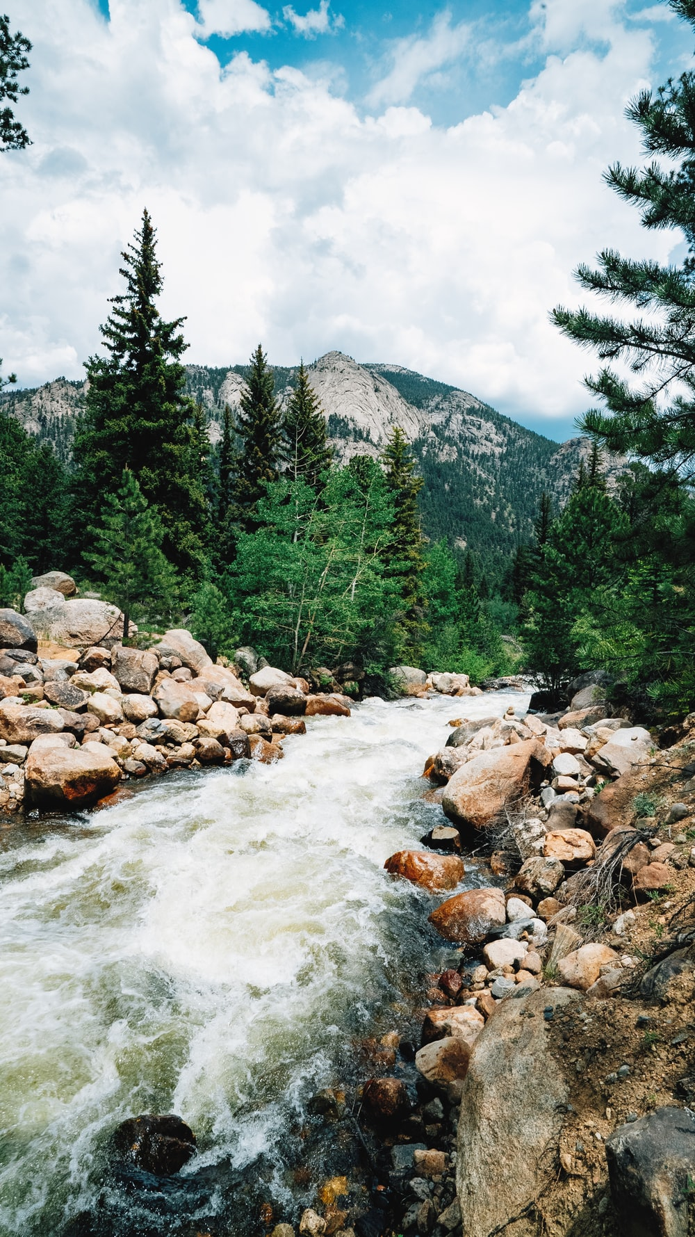 photography of river and pine trees