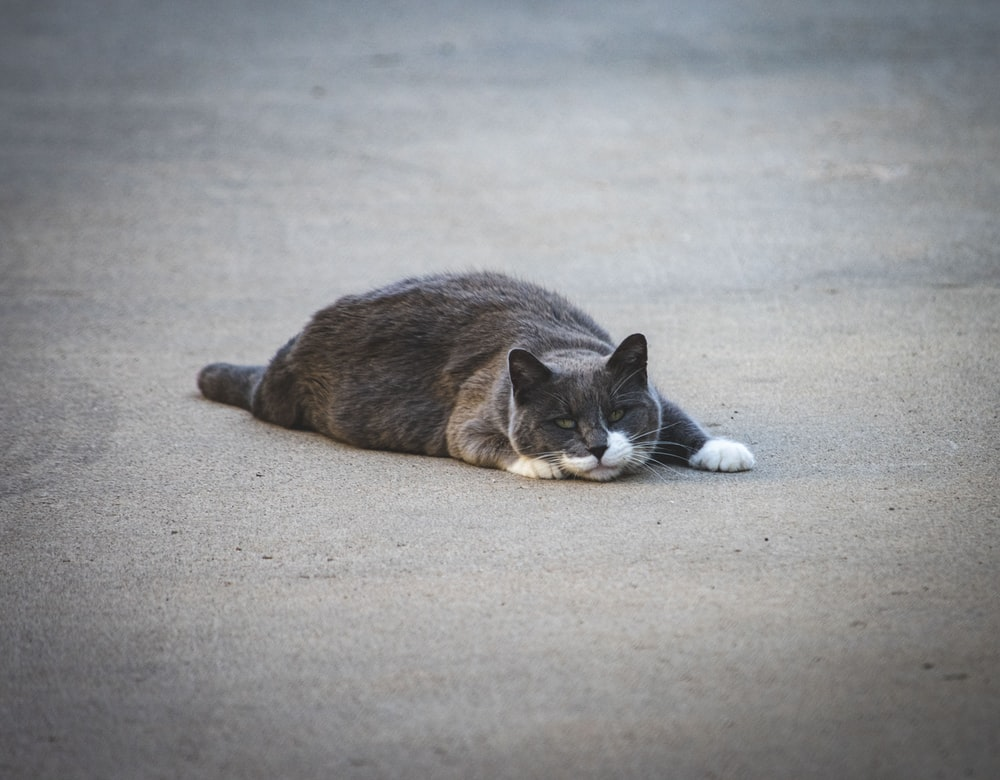 cat lying on concrete surface