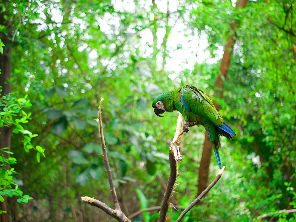 green and blue parrot pearch on tree