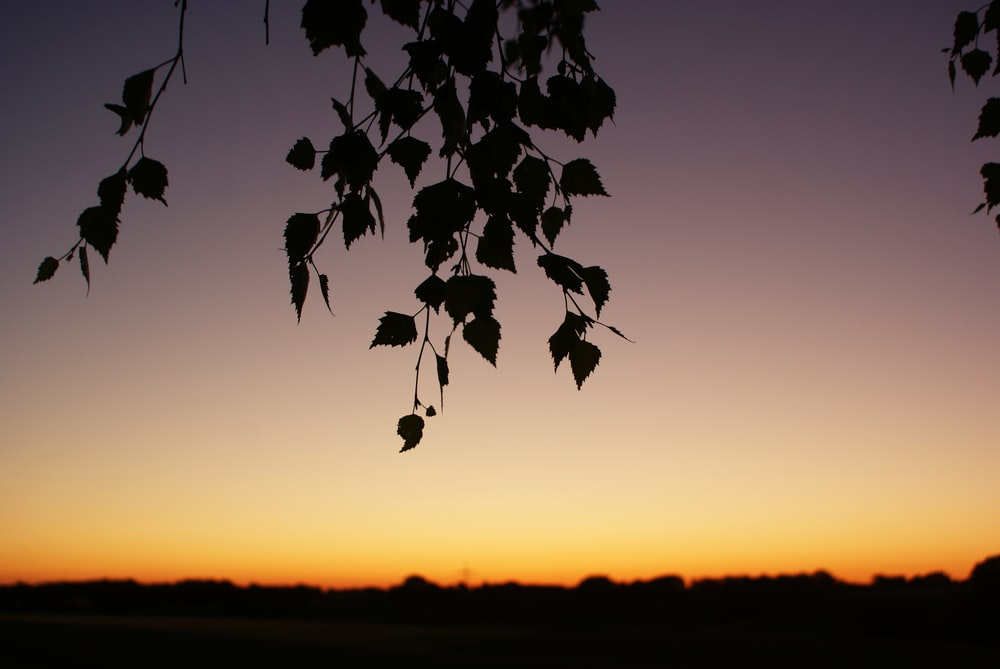 silhouette of leaves during golden hour