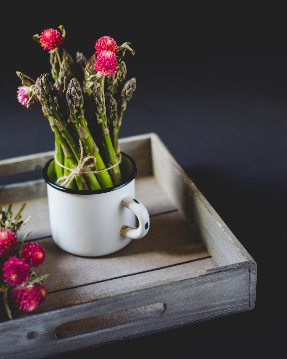plants in white vase