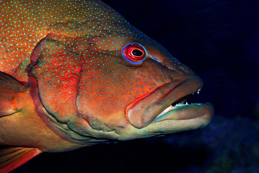 close-up photography of fish