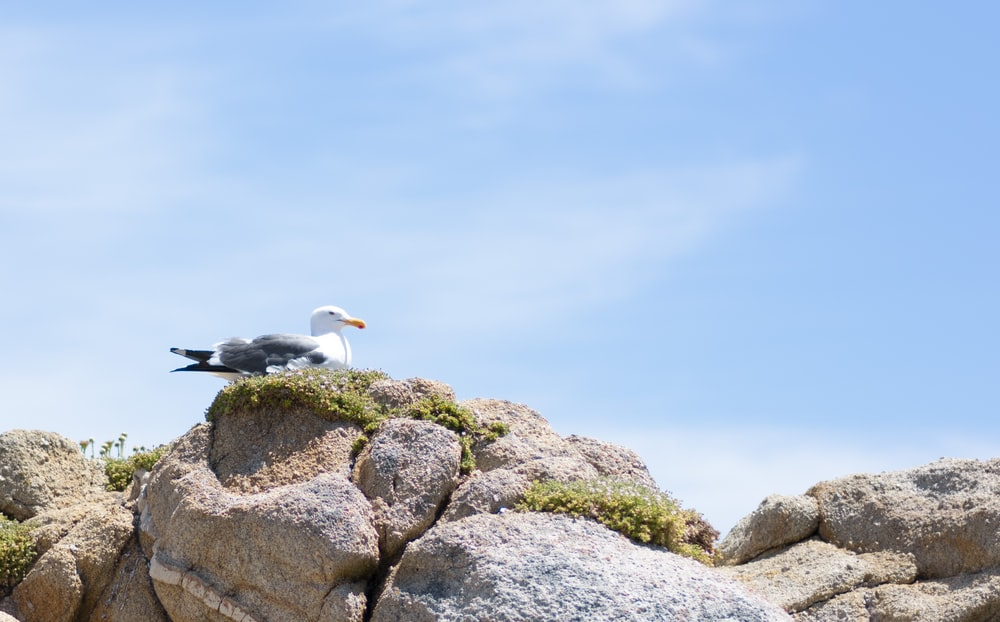 seagull on rock surface