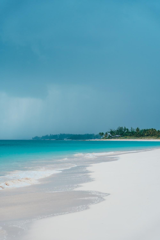 white shore beach