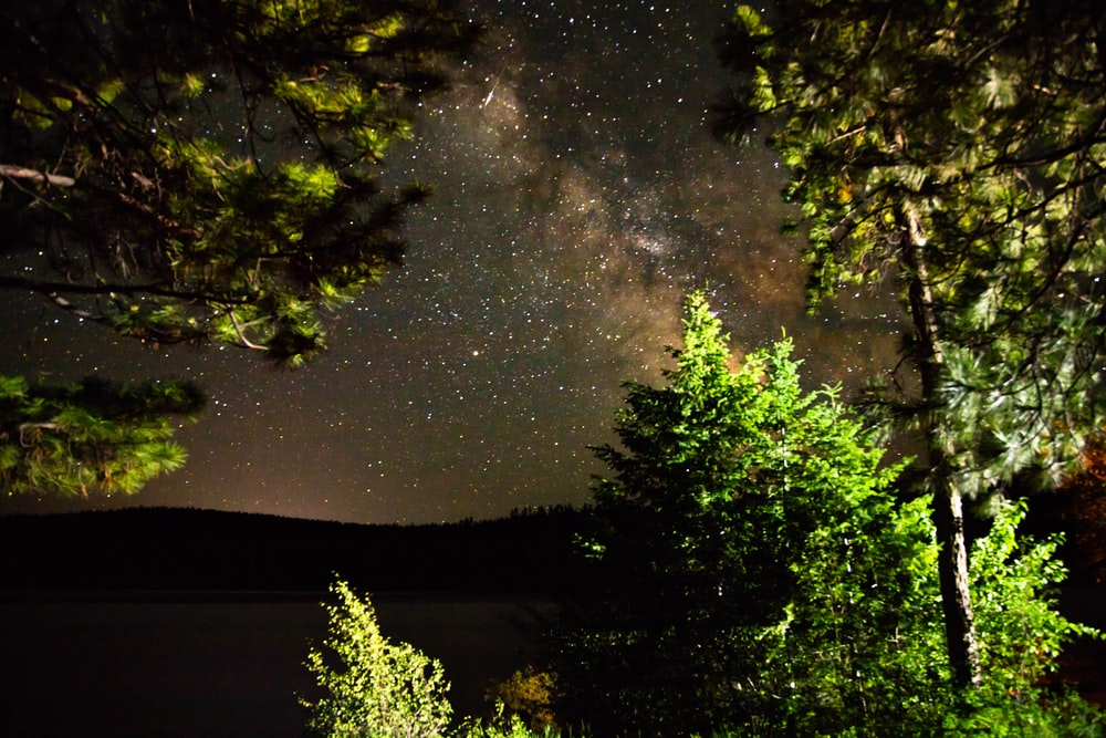 green and brown trees under starry night