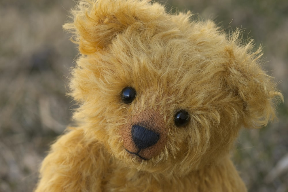 close-up photography of brown teddy bear