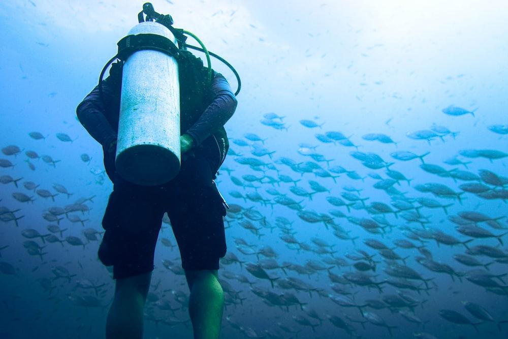 scuba diver watching school of fish under water