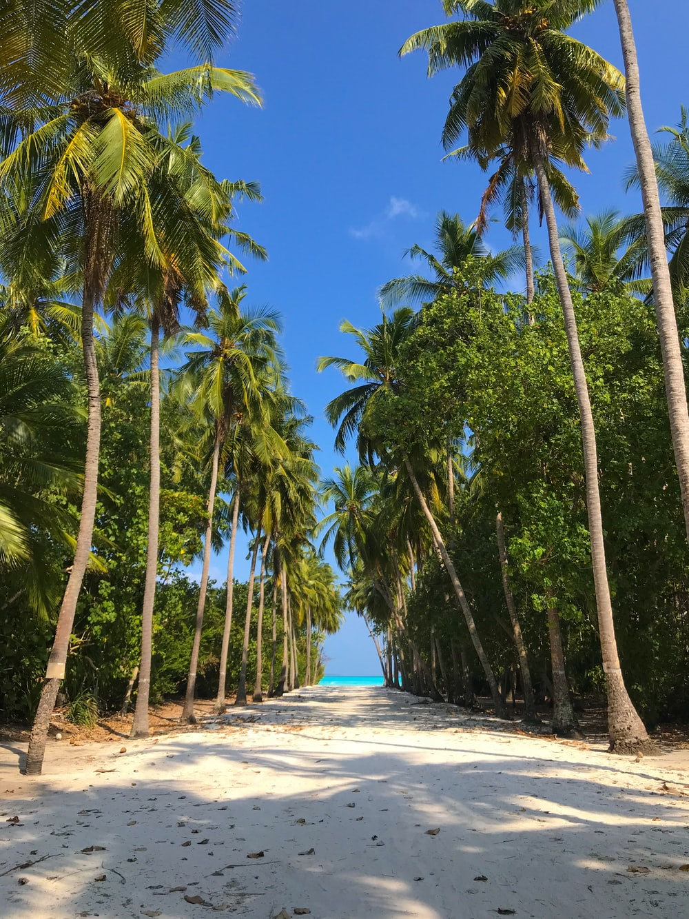 road lined with coconut trees