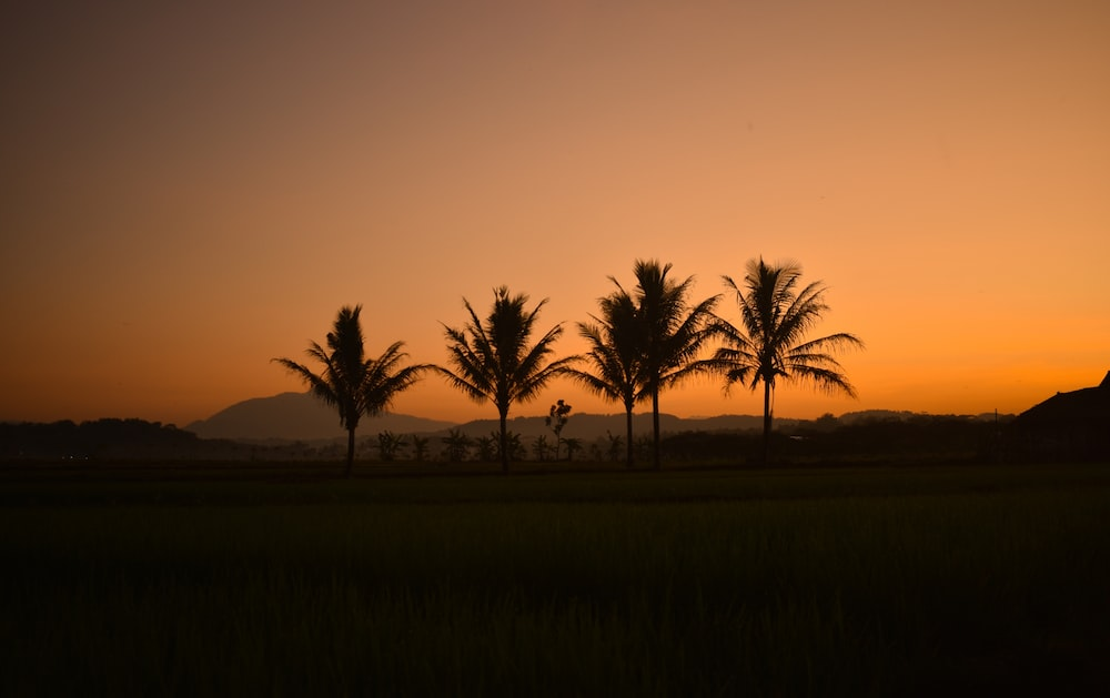 silhouette view of palm trees during golden hour
