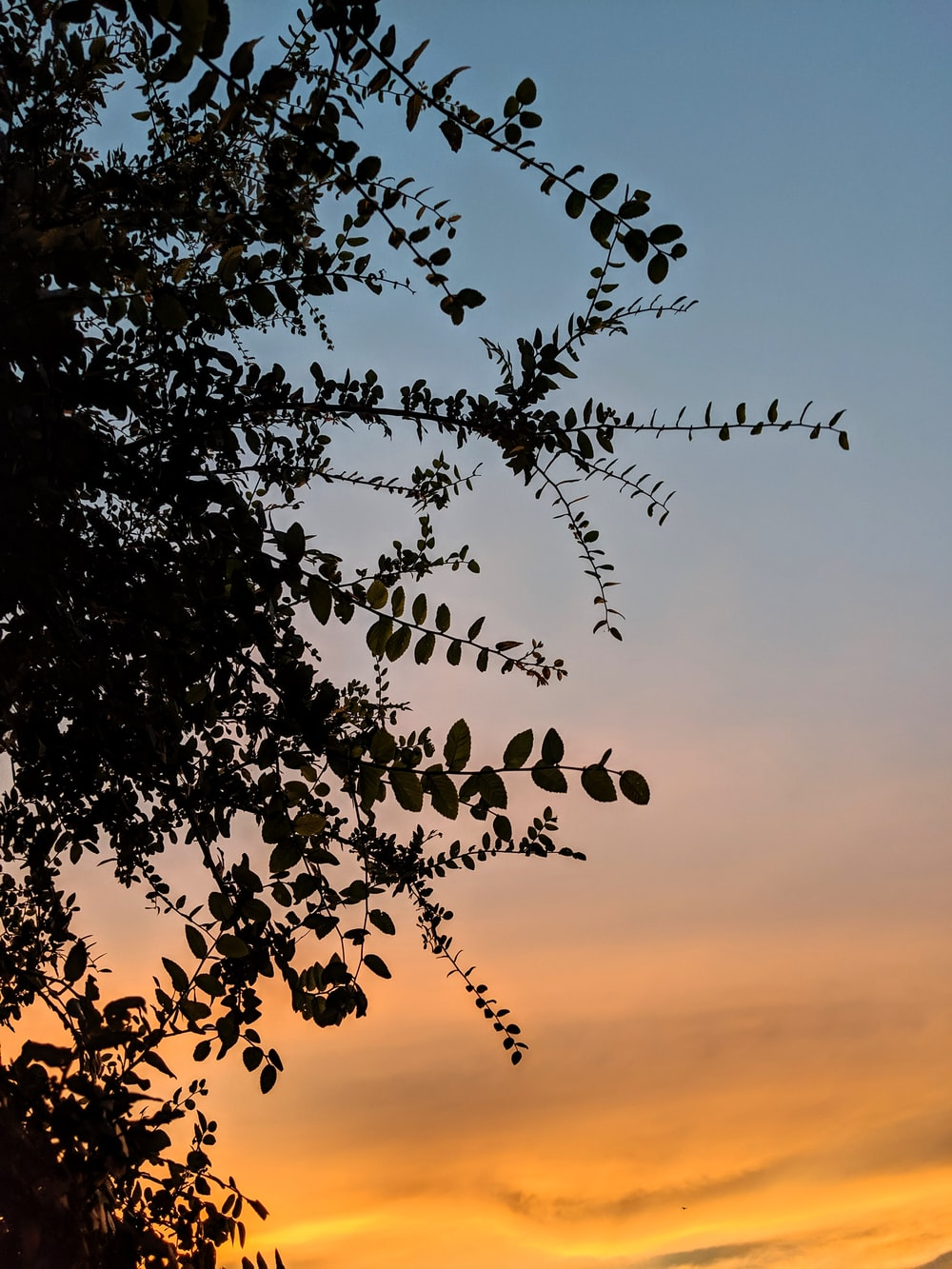 green leafy tree at sunset