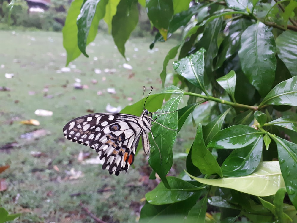 white and black butterfly on green leaves