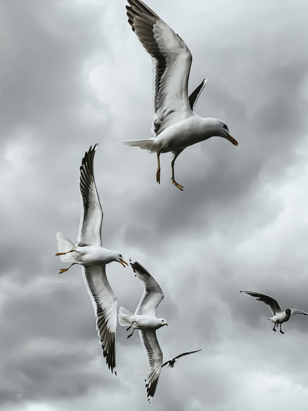 white and gray seagulls at flight