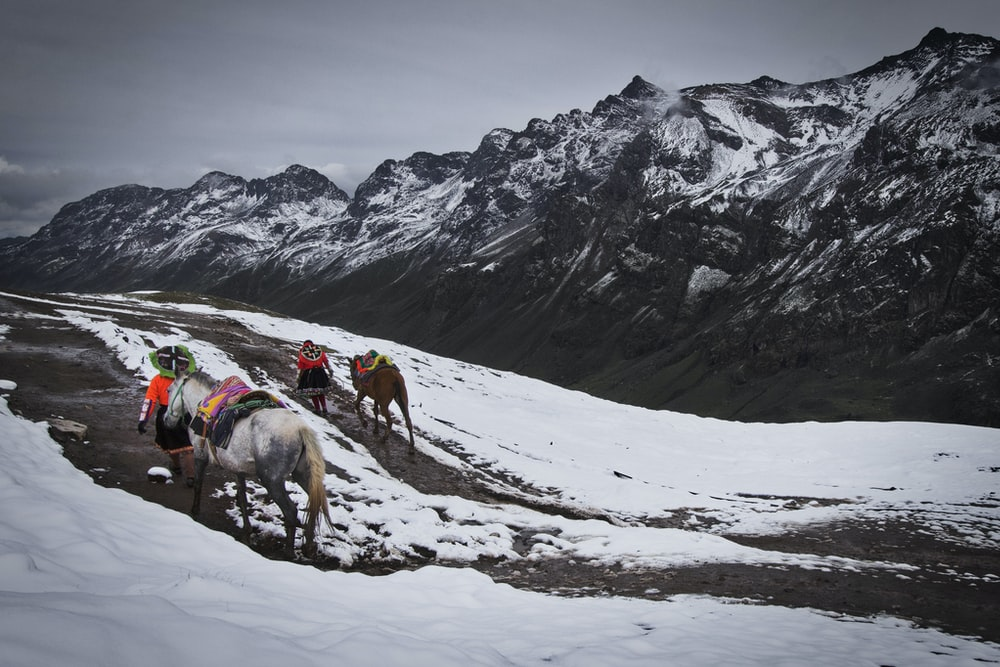 horses walking near snow covered mountain during daytime