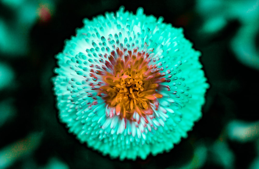 teal and yellow-petaled flower