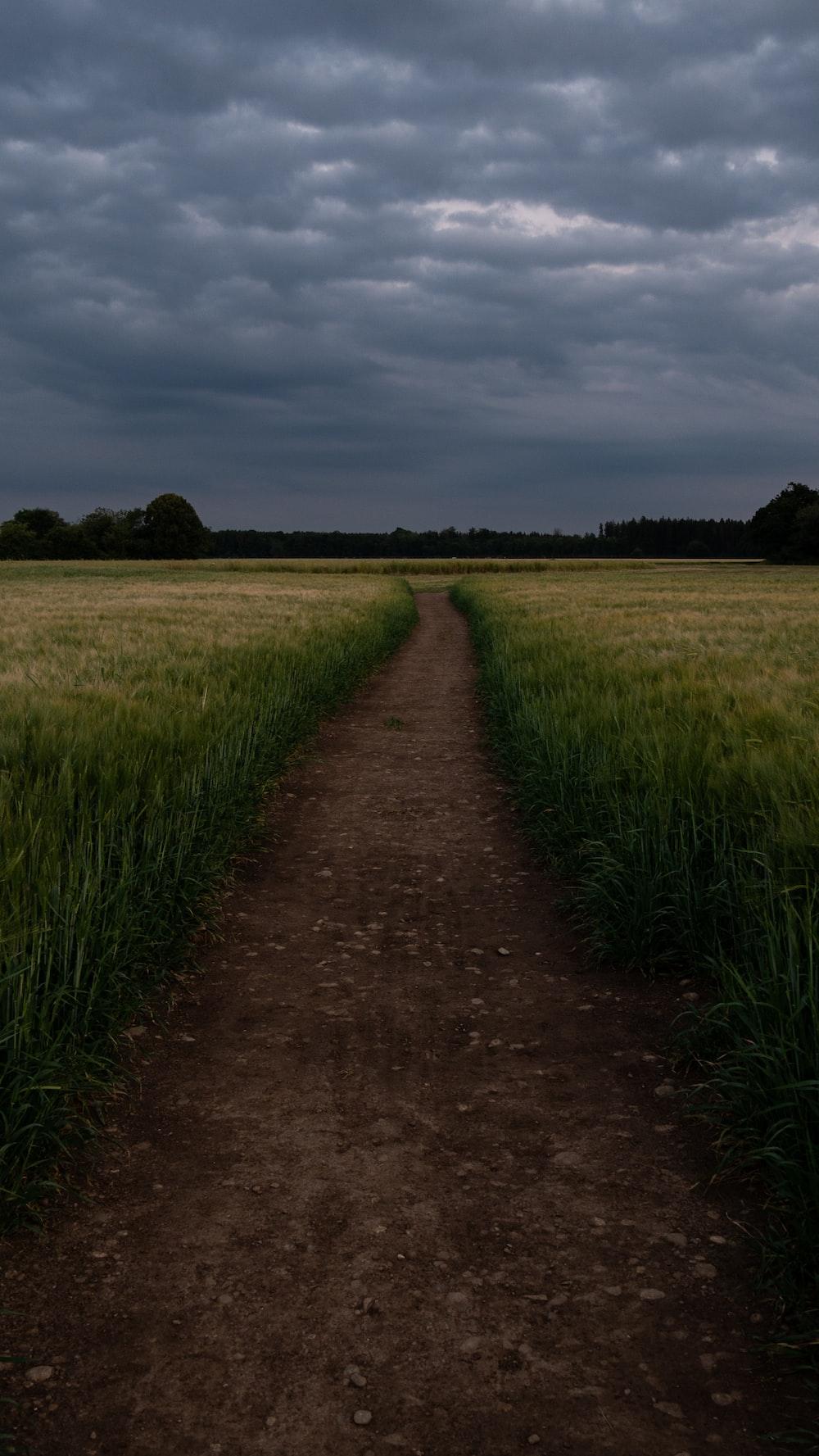 narrow pathway between wheat field