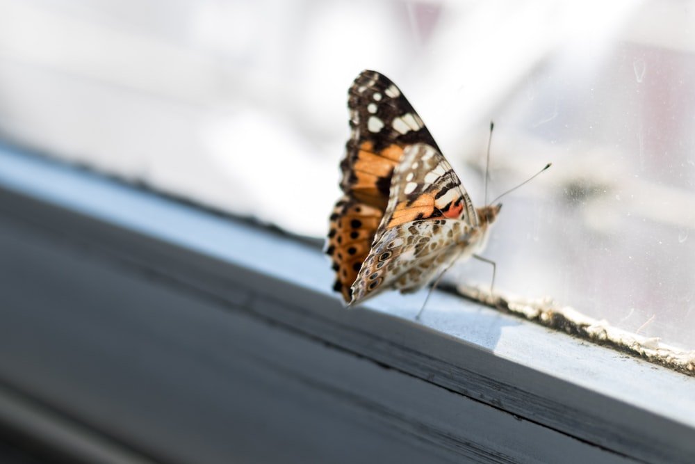 brown and black butterfly on window frame