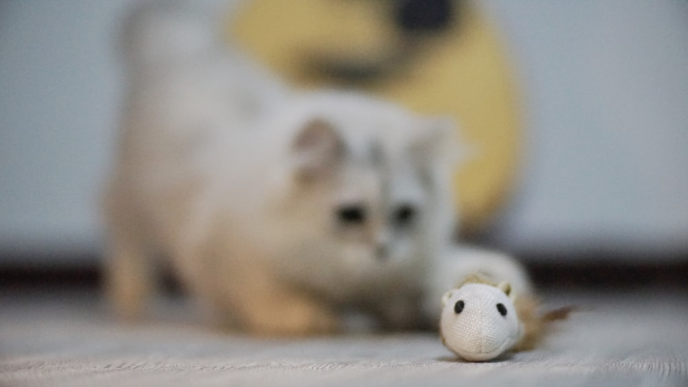 short-furred white cat on selective focus photography