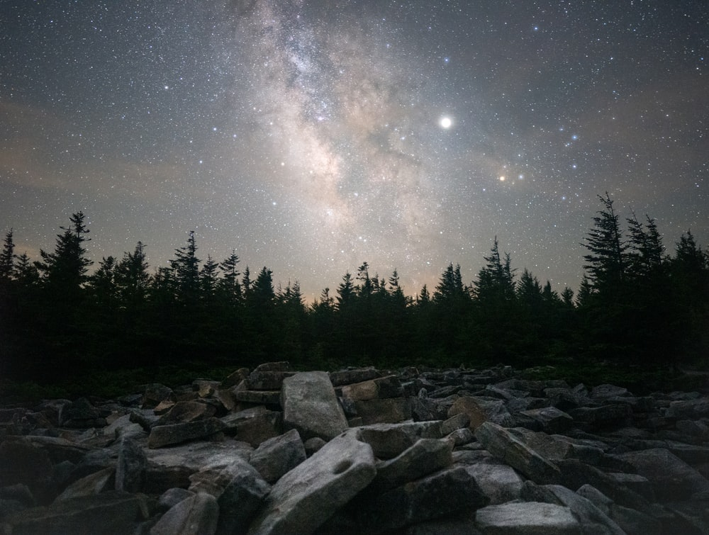 gray concrete bricks and pine tree field under starry sky