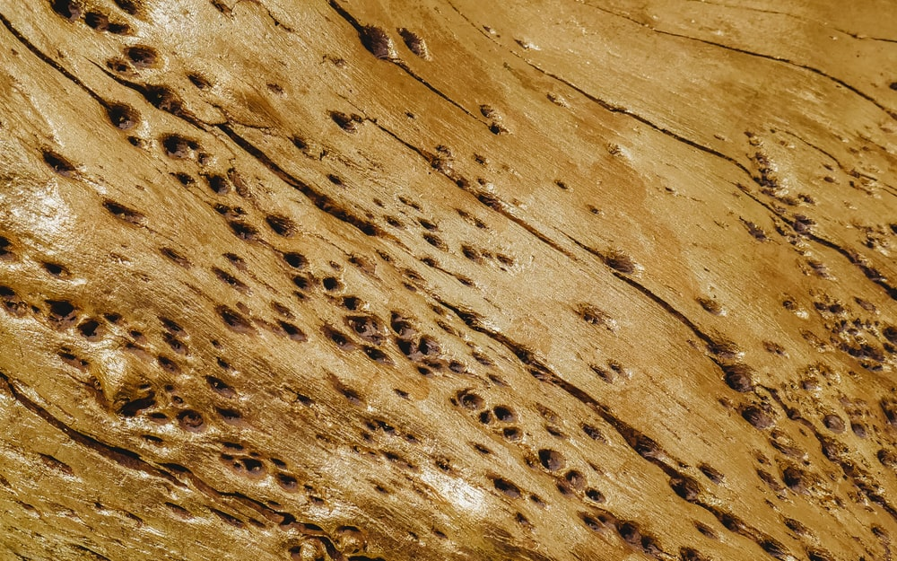 holes on brown wooden surface