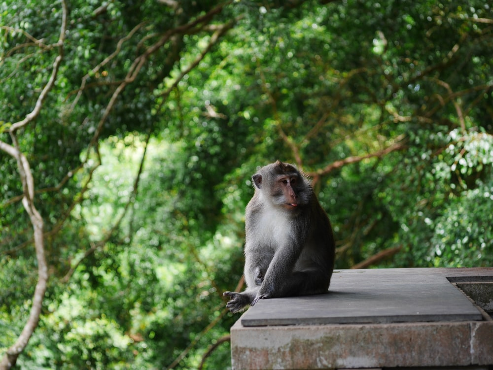 monkey sitting on concrete surface