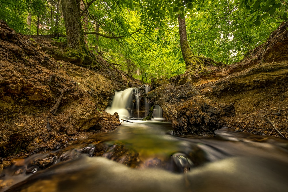 river in the forest during daytime