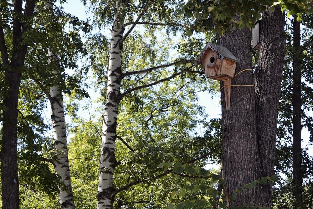 brown wooden birdhouse on tree trunk