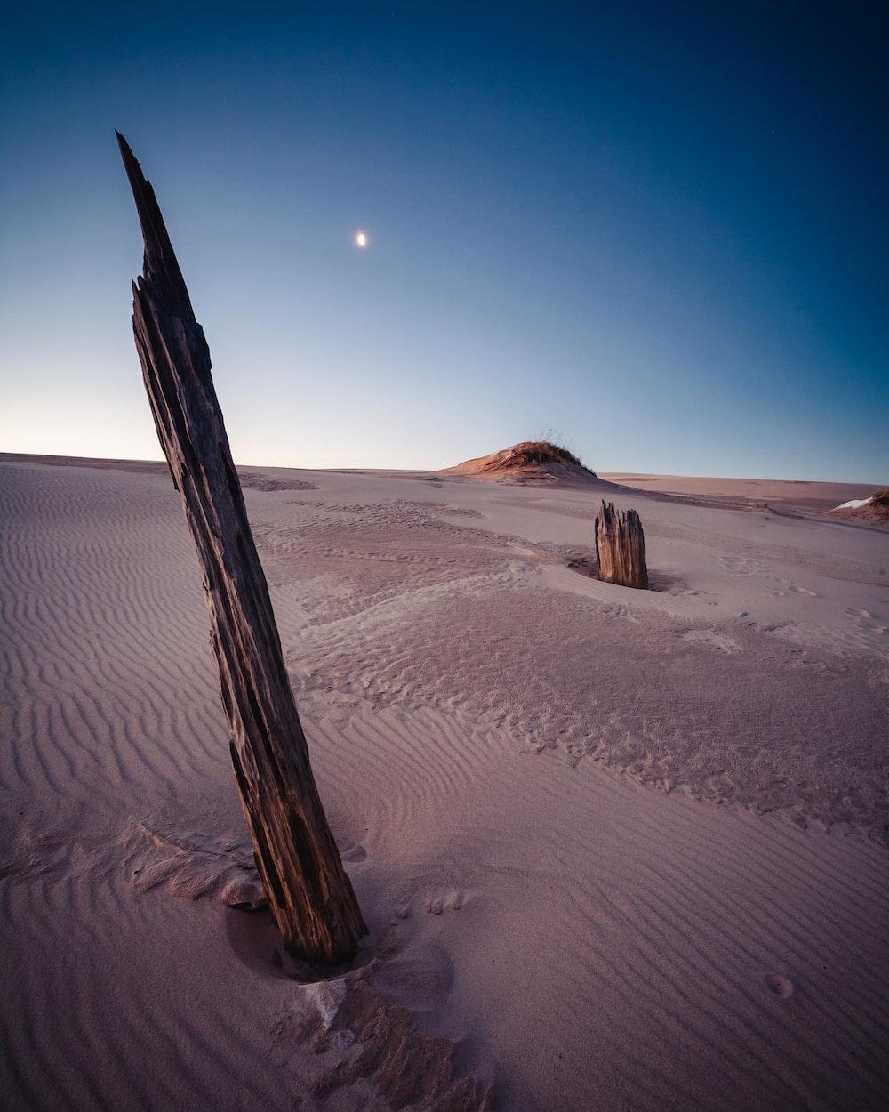 brown driftwood