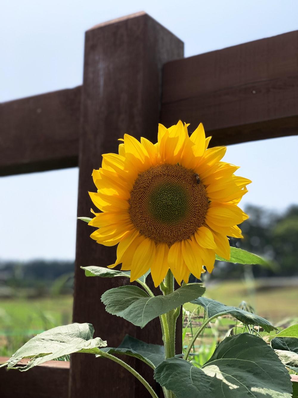 yellow petaled flower near