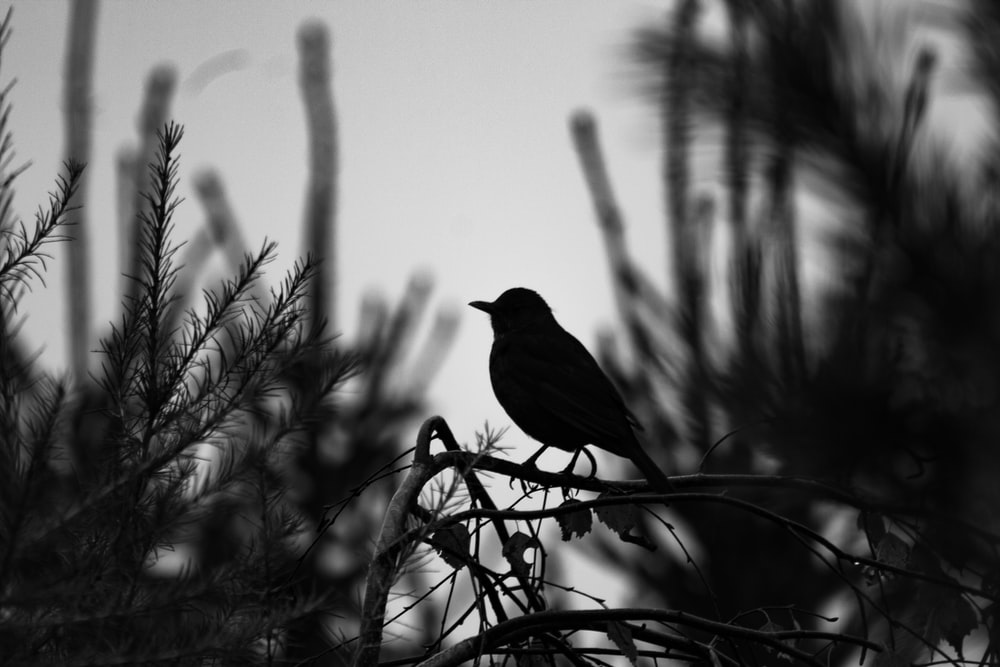 grayscale photography of bird on plants