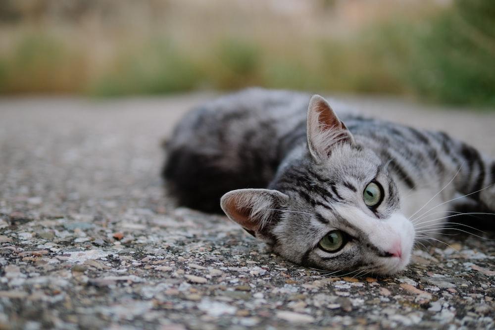 brown tabby cat on gray floor