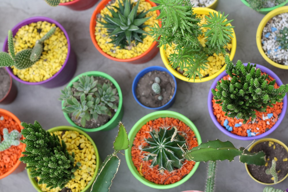 green succulent and cactus plants in assorted-color pots