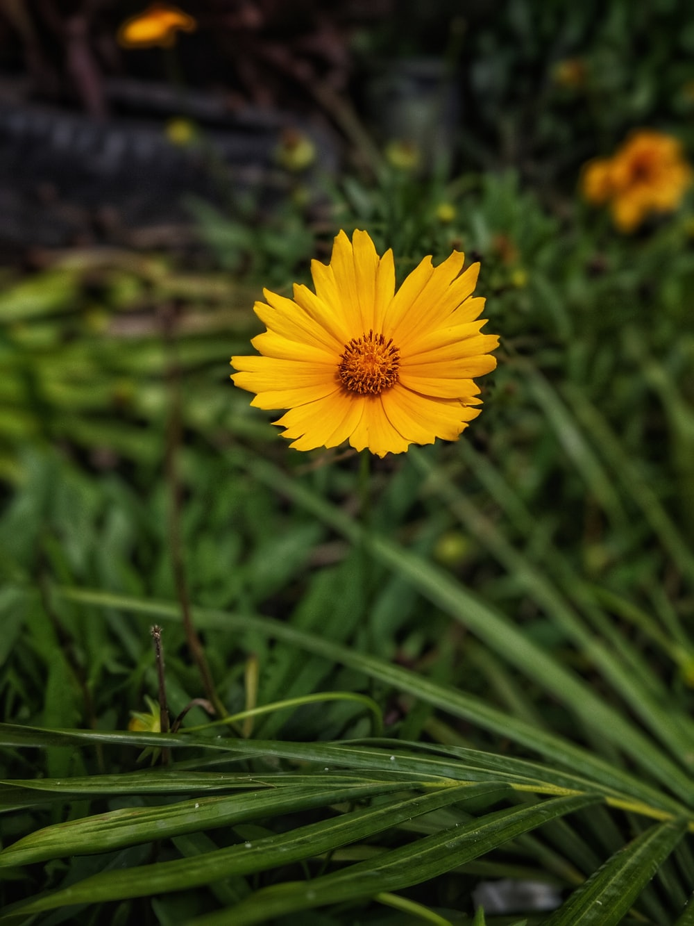 yellow petaled flowe