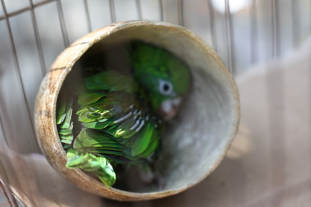 shallow focus photography of green bird